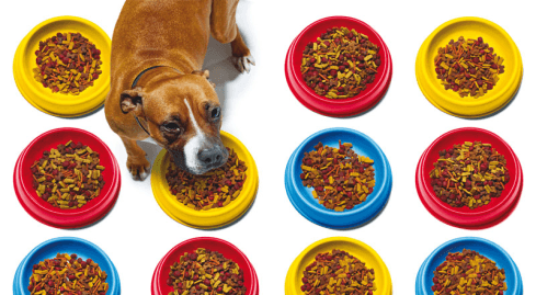 Photo of the chemistry of dog food