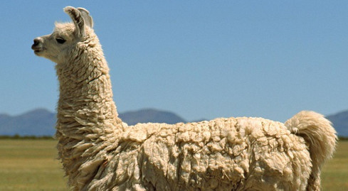 Photo of לאחר 15 שנים, הלאמה של Winamp מסיימת את דרכה