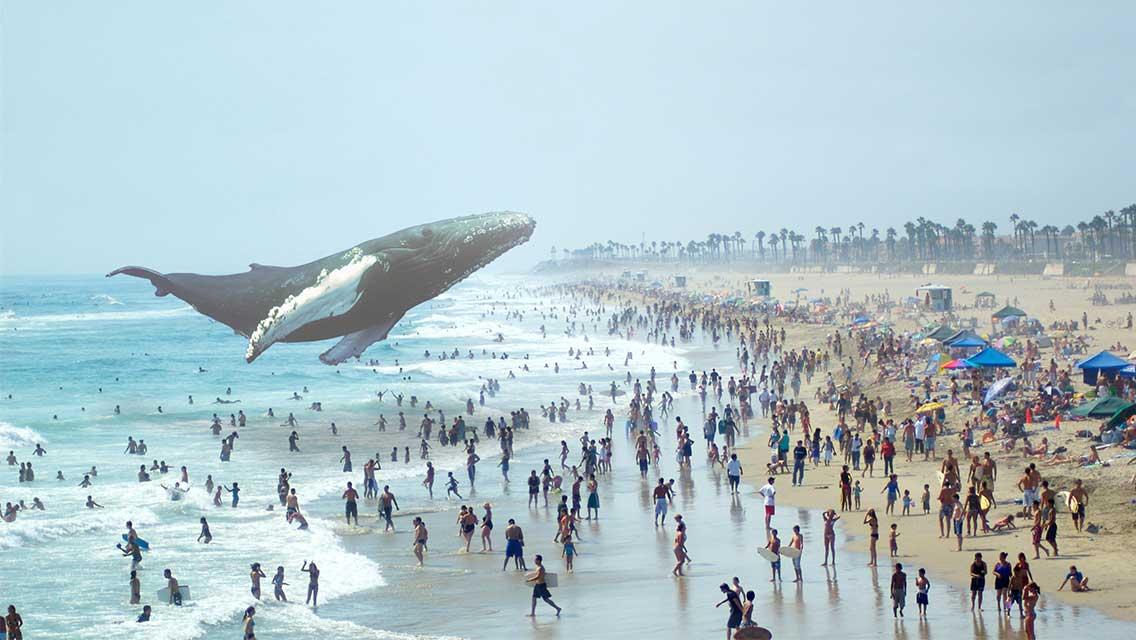whale_1136