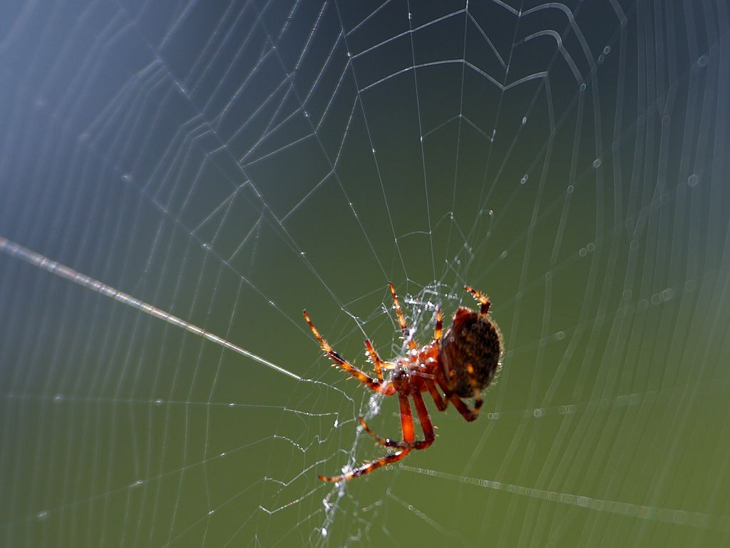 Photo of the next generation: Genetically engineered spider shields are gaining momentum