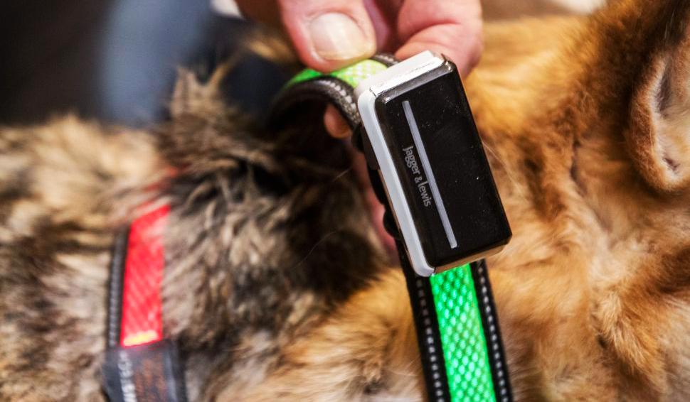 Photo of הכירו את הגאדג'ט שיעזור לכם להבין את הכלב שלכם