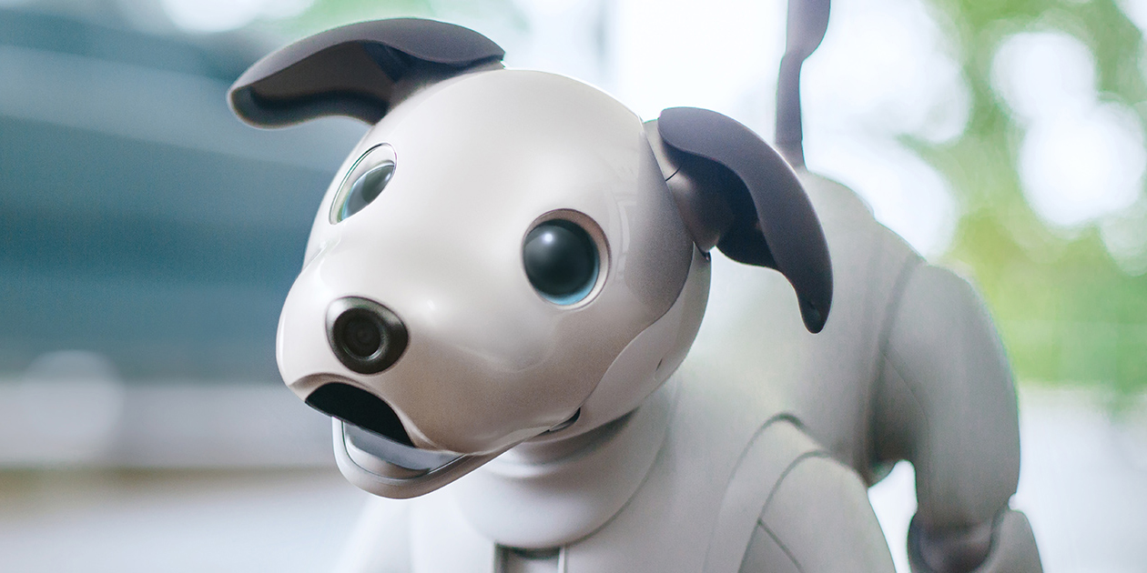 Photo of The Robotic Dog's Return