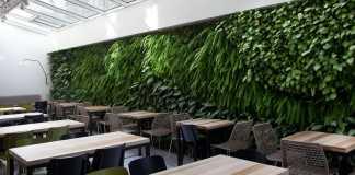 לפתח סביבה ירוקה